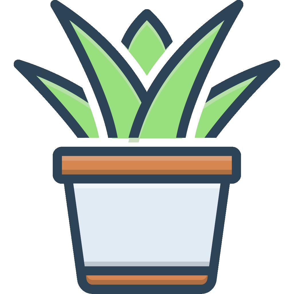 多肉植物和英语课